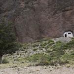 Foxy_Fox_Bariloche_Patagonia_2