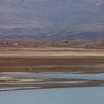 Foxy_Fox_ElCalafate_Lake2