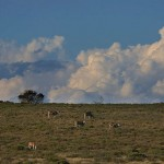 Foxy_Fox_JBAY_Clouds