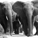 Foxy_Fox_JBAY_Elephants