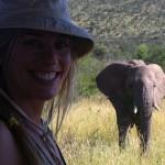 Foxy_Fox_Madikwe_Josi_Elephant