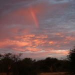 Foxy_Fox_Madikwe_Rainbow