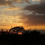 Foxy_Fox_Madikwe_SunSet_1