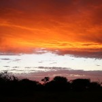 Foxy_Fox_Madikwe_SunSet_2