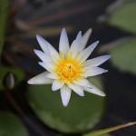Foxy_Fox_Bali_Ubud_Flower