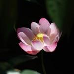 Foxy_Fox_Bali_Ubud_Flower2