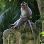 Foxy_Fox_Bali_Ubud_Monkey