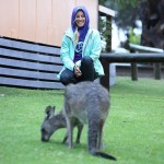 Foxy_Fox_Australia_Durras_Kangaroo