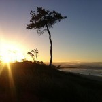 Foxy_Fox_ByronBay_SunSet