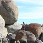 Foxy_Fox_Melbourne_Rocks