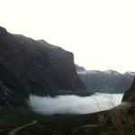 Foxy_Fox_NZ_Fog