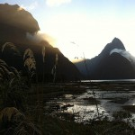 Foxy_Fox_NZ_MilfordSound1
