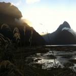 Foxy_Fox_NZ_MilfordSound1