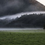Foxy_Fox_NewZealand_South_Fog