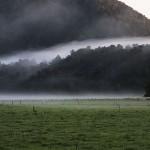 Foxy_Fox_NewZealand_South_Fog
