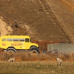Foxy_Fox_NewZealand_South_Truck