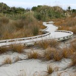Foxy_Fox_NewZealand_South_WalkWay