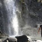 Foxy_Fox_NewZealand_South_Wash