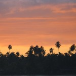 Foxy_Fox_Tahiti_Palmtrees_Sunset