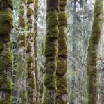 Foxy_Fox_EmilyCarrTrees