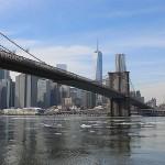 Foxy_Fox_NYC_Bridge