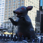 Foxy_Fox_NYC_Rat